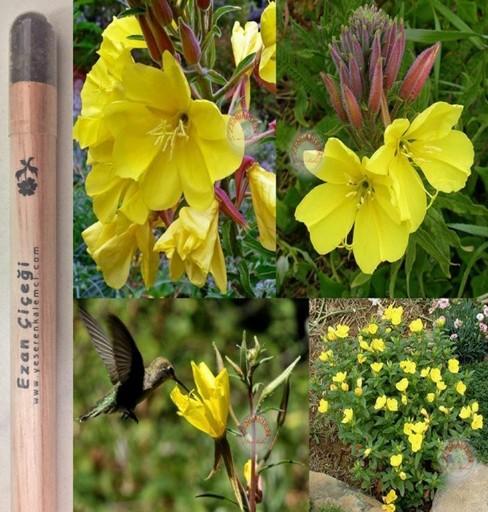 Ezan Çiçeği Tohumlu Kalem